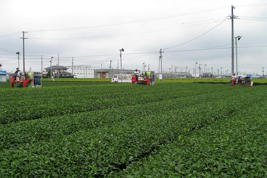勝間田開拓茶農協